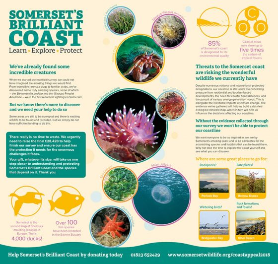 Somerset Wildlife Trust Coastal Appeal